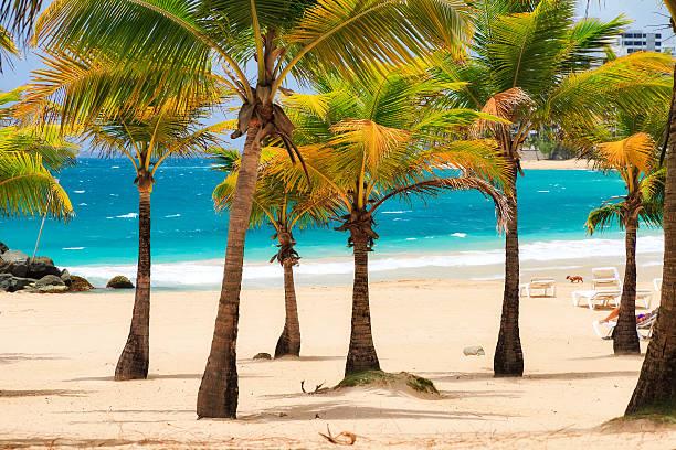 Condado palm beach – Foto