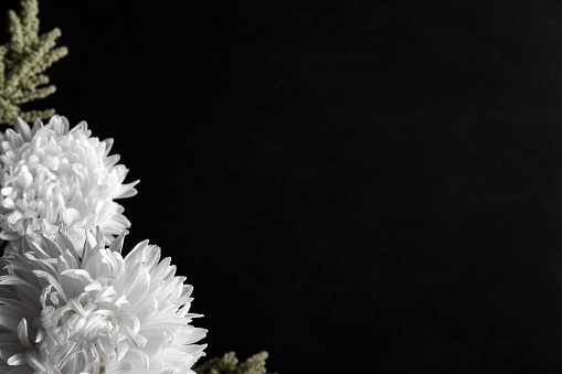 condolence card with aster flowers on the dark background