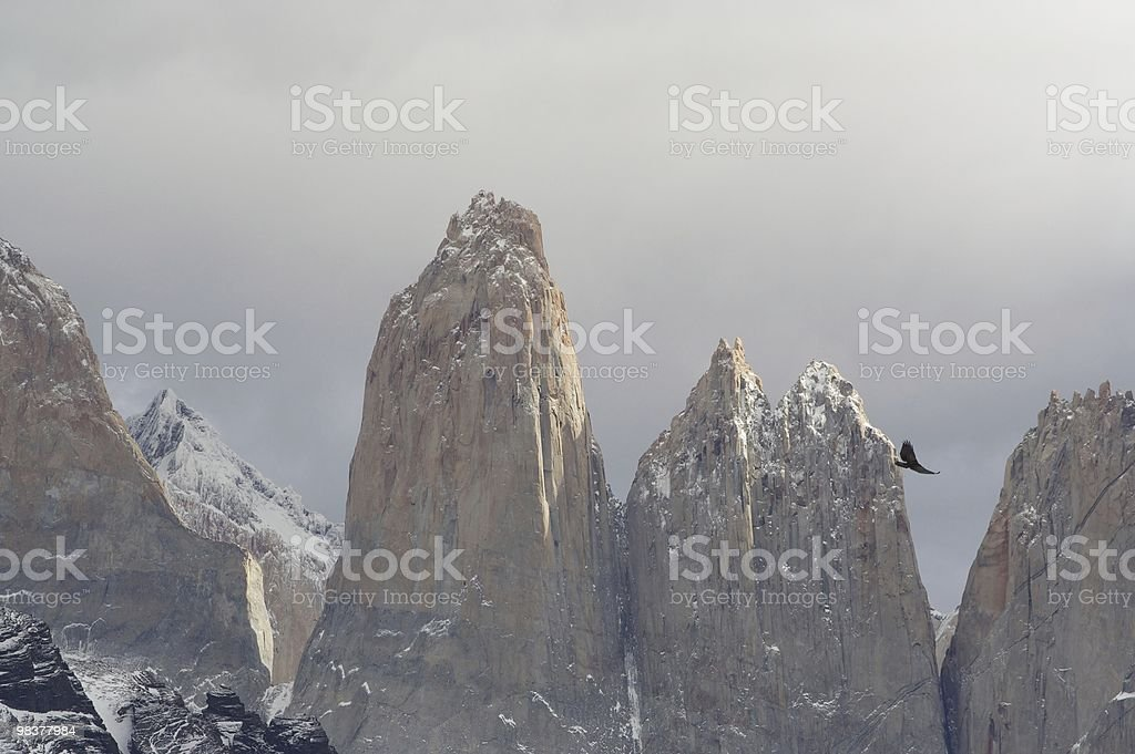 cuernos condor royalty-free stock photo