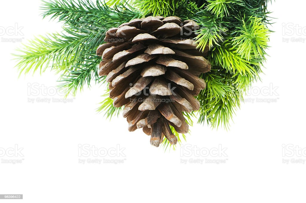 Cone and christmas tree isolated on white royalty-free stock photo