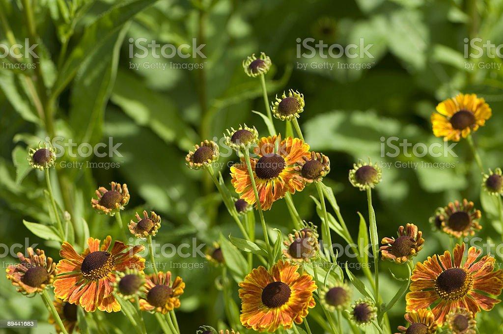 Cône de fleurs photo libre de droits