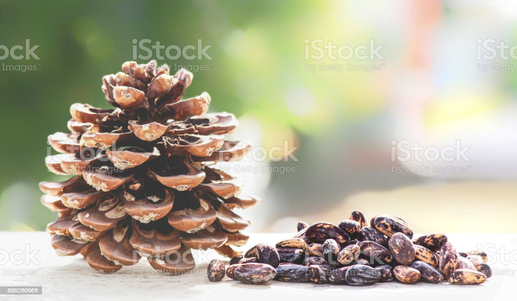 Cone Of Stone Pine And Seeds In Nature, Pinus Pinea stock photo