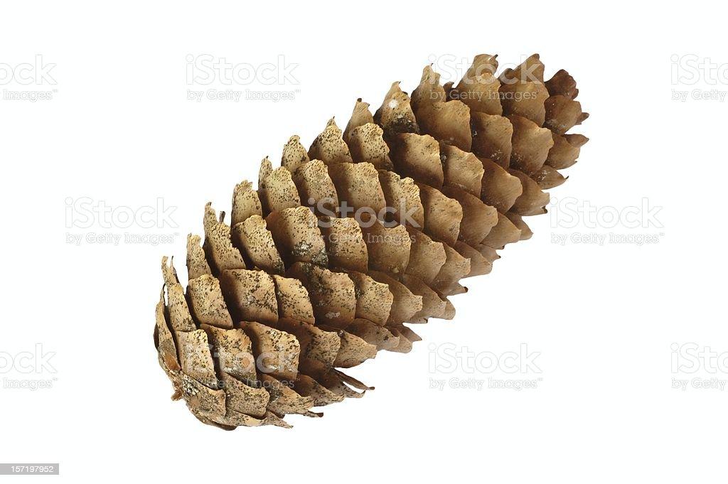 Cone stock photo