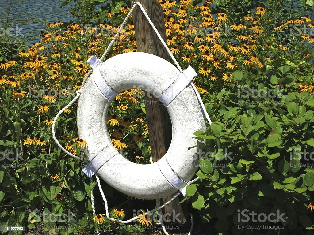 Coneflowers By the Water royalty-free stock photo