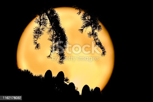 1008093204 istock photo Cones and branches of a cedar tree with a full moon as background 1162178032