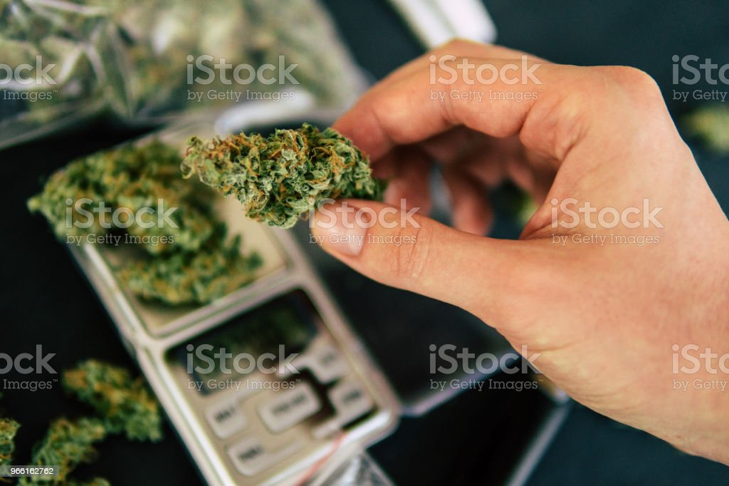 Cones of cannabis in hand weed flowers lie on the scales close up top - Royalty-free Agriculture Stock Photo