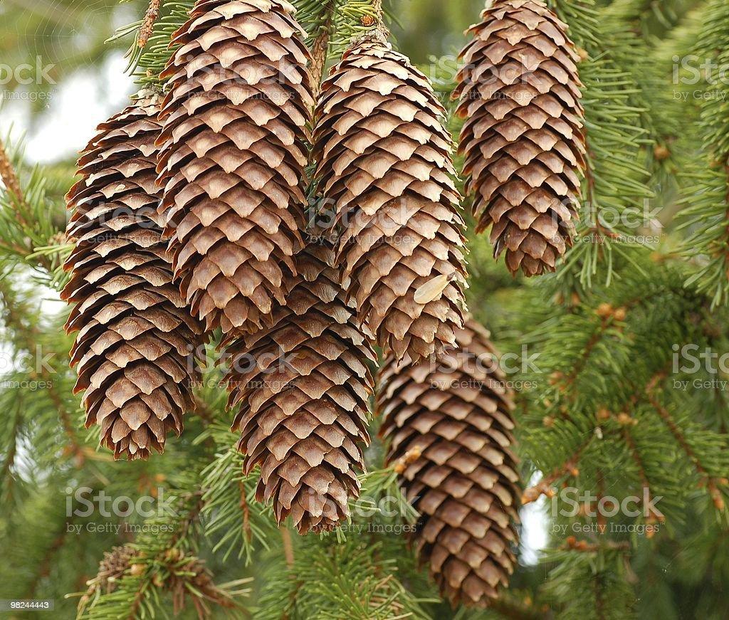 Cones royalty-free stock photo