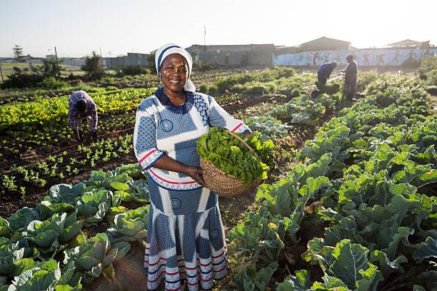 Confident African woman in vegetable garden stock photo
