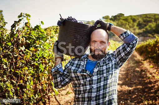 Portrait of confident farmer carrying container in vineyard