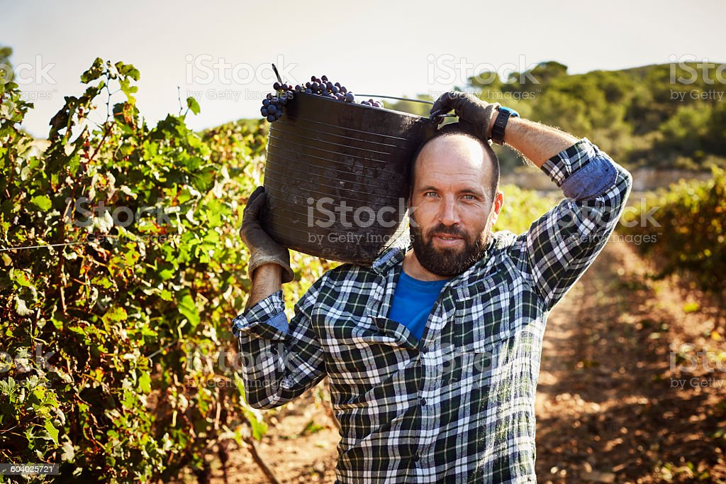 Confident farmer carrying container in vineyard stock photo