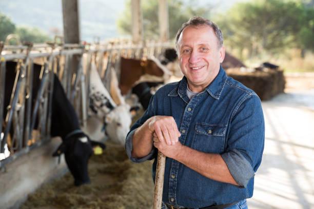 vertrauter mann besitzer von milchviehbetrieb - landwirtschaftlicher beruf stock-fotos und bilder