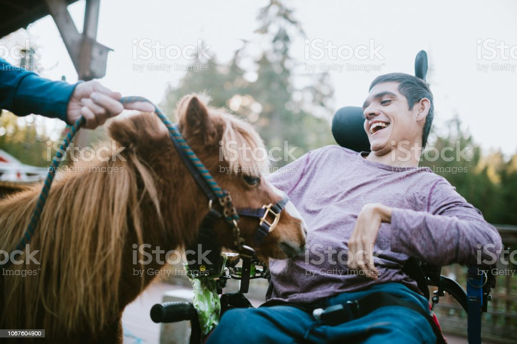 Confident Young Man In Wheelchair Visits Therapy Horse stock photo