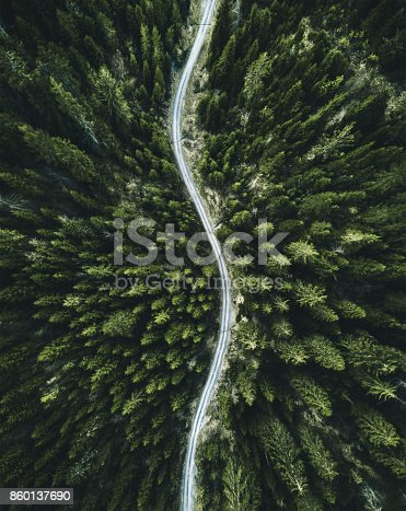 istock confirous tree forest aerial view in north america 860137690