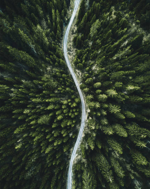 confirous tree forest aerial view in north america stock photo