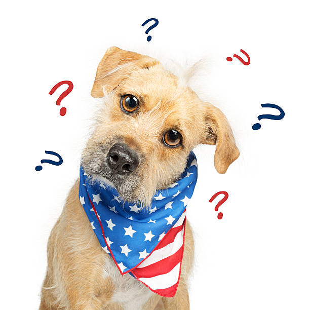 Confused Political American Dog stock photo