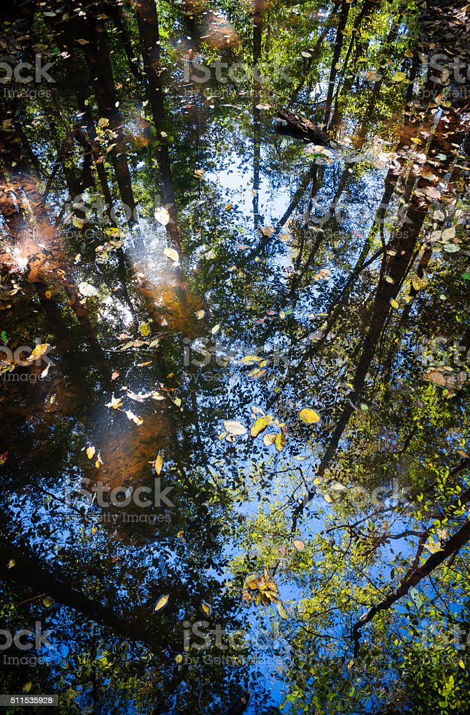 Congaree National Park stock photo