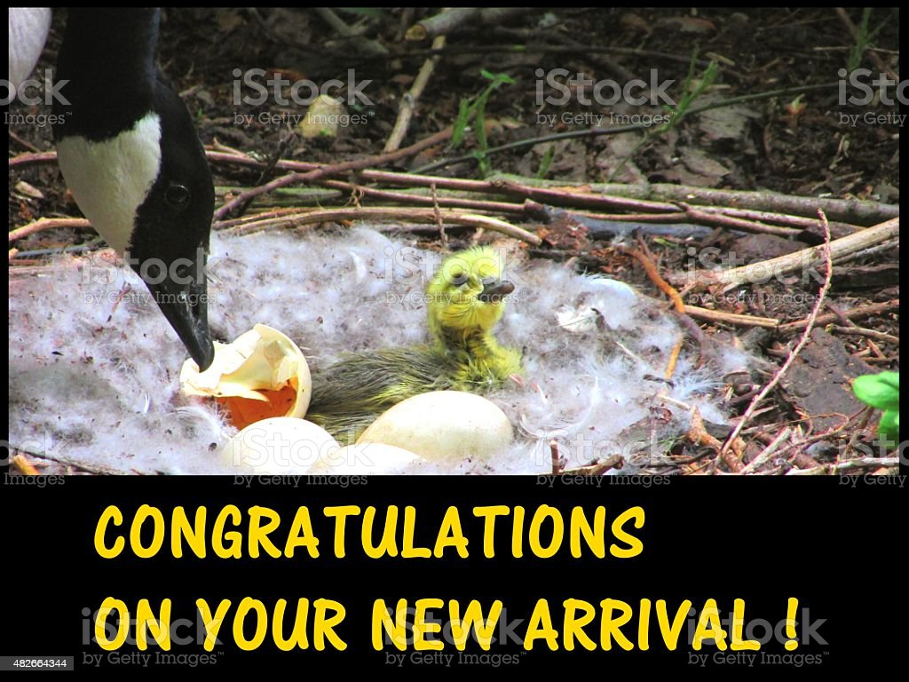 congratulations on your new arrival stock photo