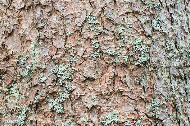 Photo of Conifer bark close up