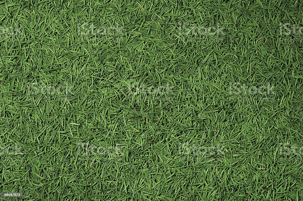 Conifer needles background royalty-free stock photo