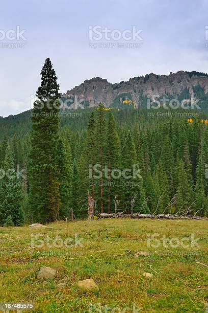 Photo of conifer trees in front of the mountain Colorado during fall