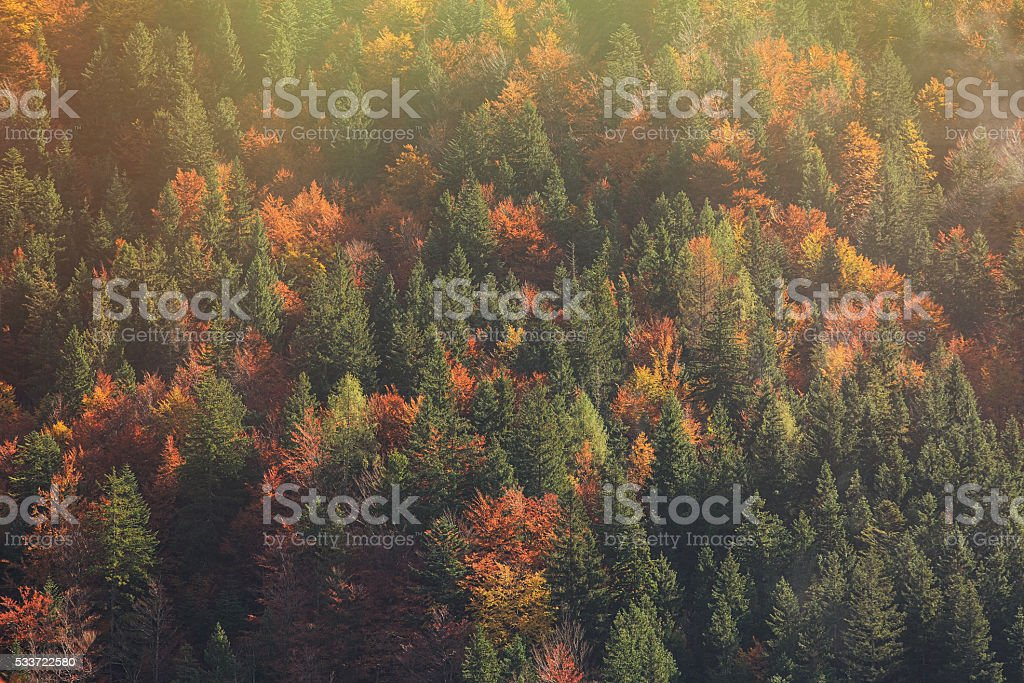 Coniferous and deciduous forest in bright morning glow stock photo