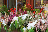 Coniferous branches, bright red flowers and berries on a windowsill strewn with snow. Christmas decoration of building facades. Early winter.
