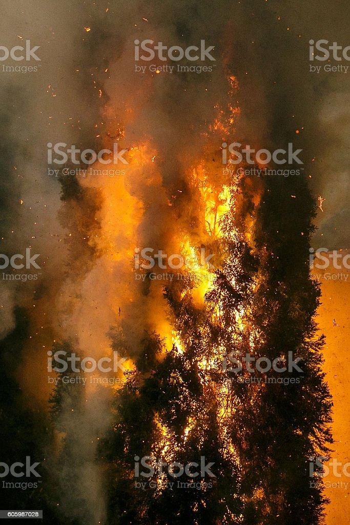 Coniferous forest in fire – Foto