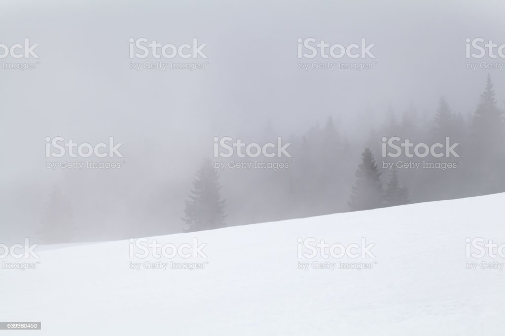 coniferous forest in fog and snow stock photo