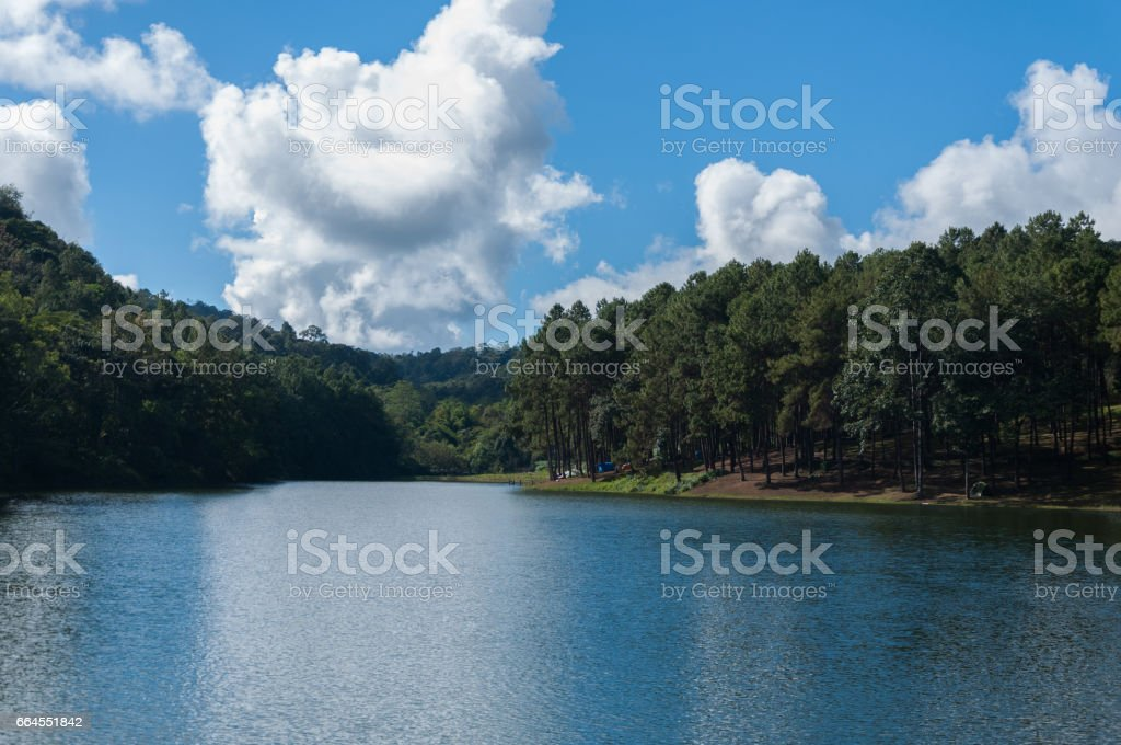 Coniferous Forest in maehongson,pang ung,Thailand royalty-free stock photo