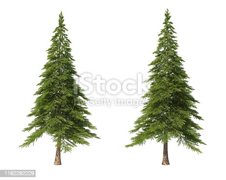 Landscaping. Coniferous trees on an isolated background. Spruce. 3d illustration.