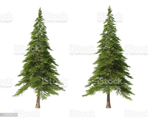 Photo of Coniferous trees on an isolated background. Spruce.