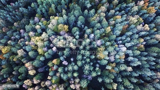 Typical Scandinavian coniferous forest seen from above.