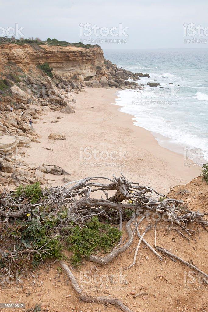 Conil and Roche Coves; Cadiz stock photo