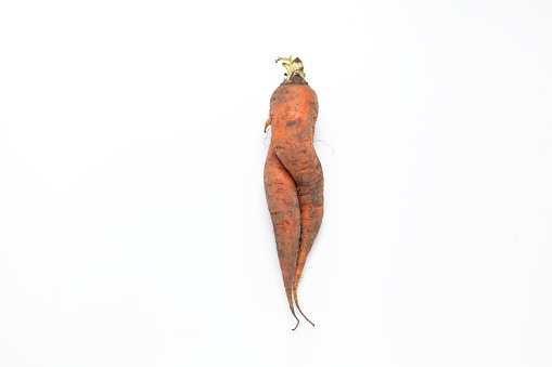 Conjoined dirty carrot. Ugly vegetable. Concept - Food waste reduction. Using in cooking imperfect products.