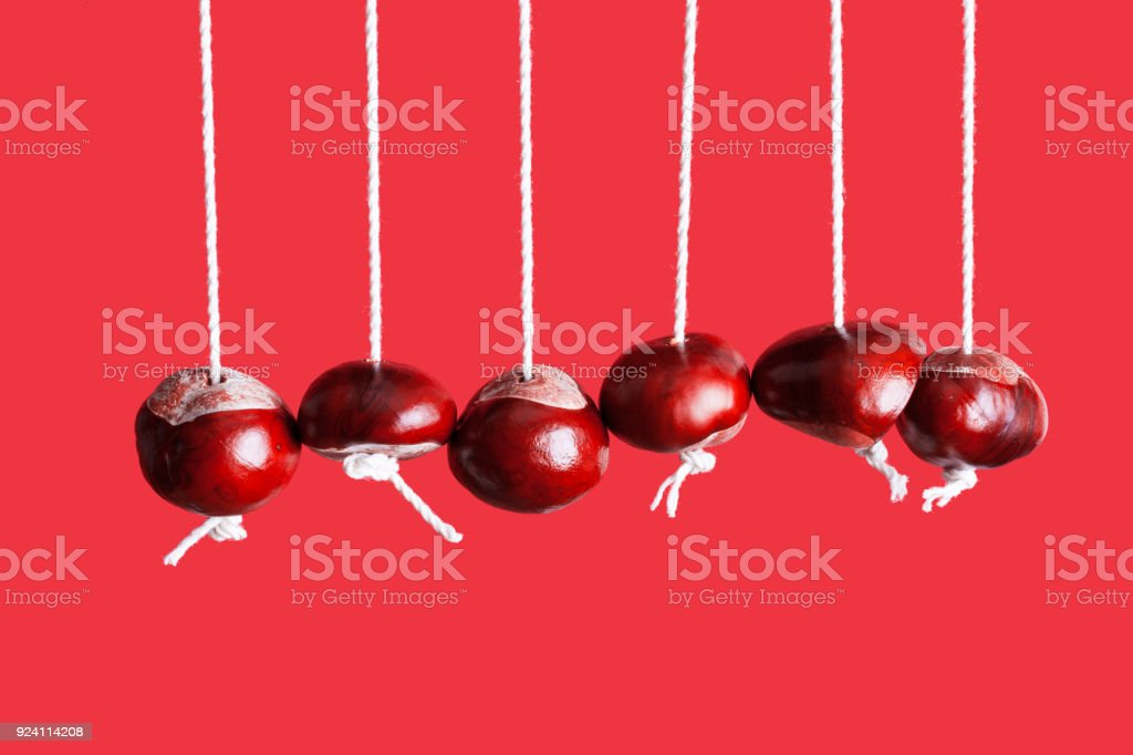 Conkers hanging from string in a row stock photo