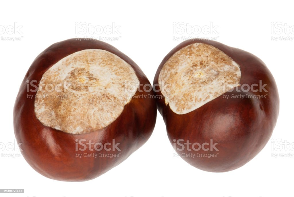 Conkers of a Horse Chestnut, isolated stock photo