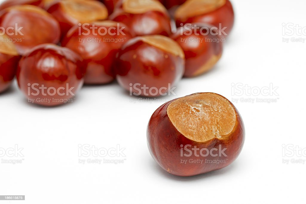 Conkers on a white background royalty-free stock photo