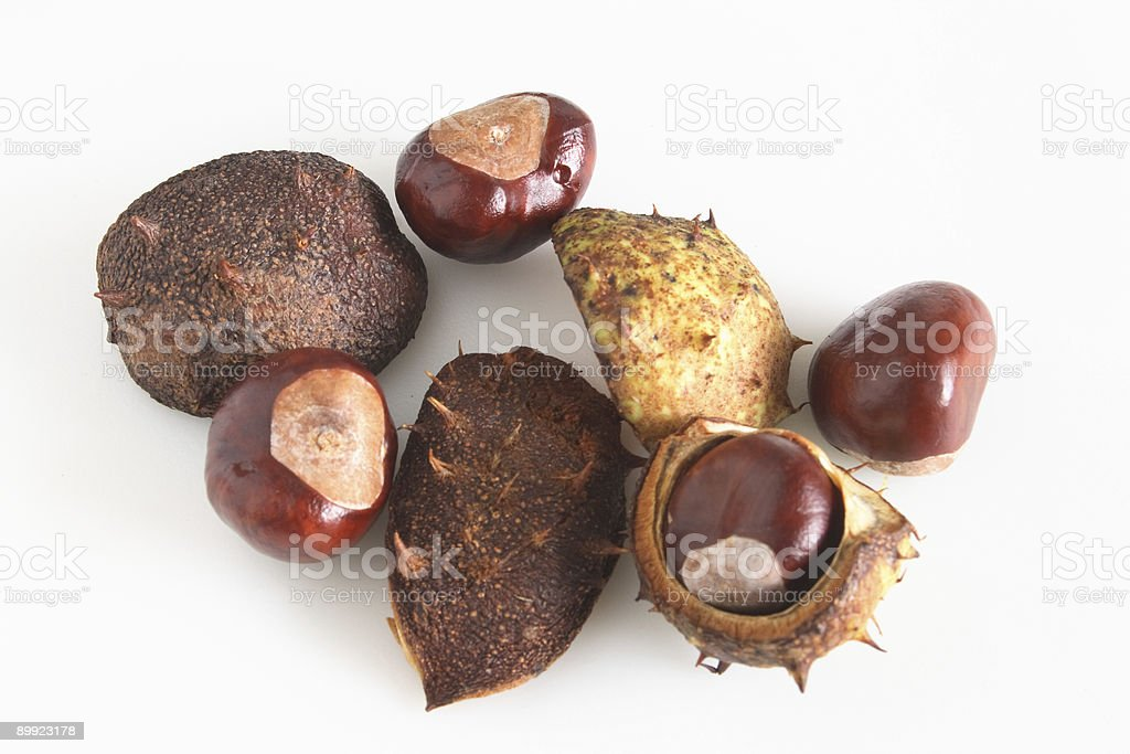 conkers royalty-free stock photo