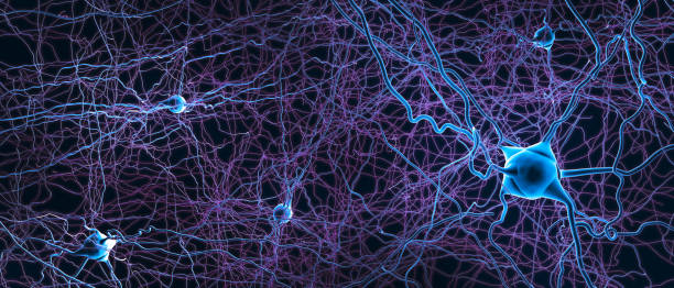 Connected neurons or nerve cells- 3d illustration stock photo