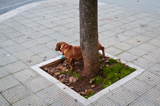 connection of the dog with the tree.