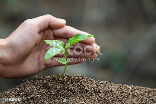 Conserve the environment by planting trees. hand protect  with plant growing. concept finance environment Earth Day In the hands of trees growing seedlings.