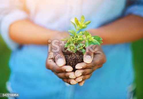Cropped shot of a person holding a plant growing in soil
