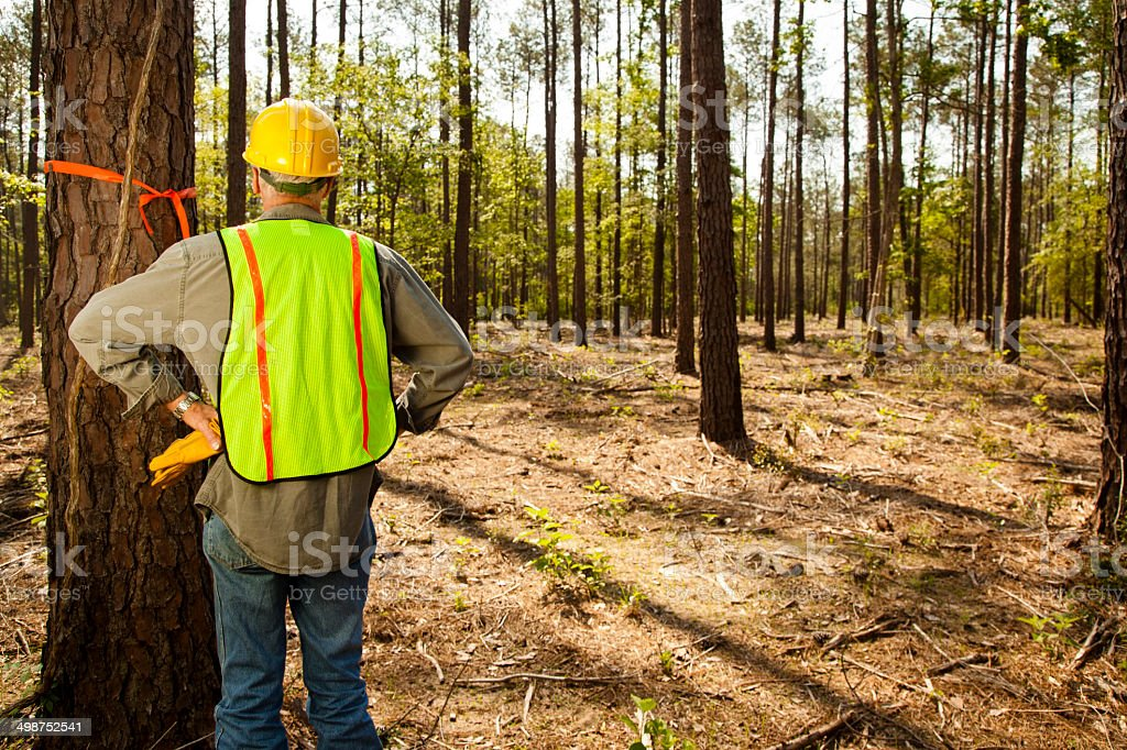Construction: Forester or builder marking trees with orange ribbon. stock photo