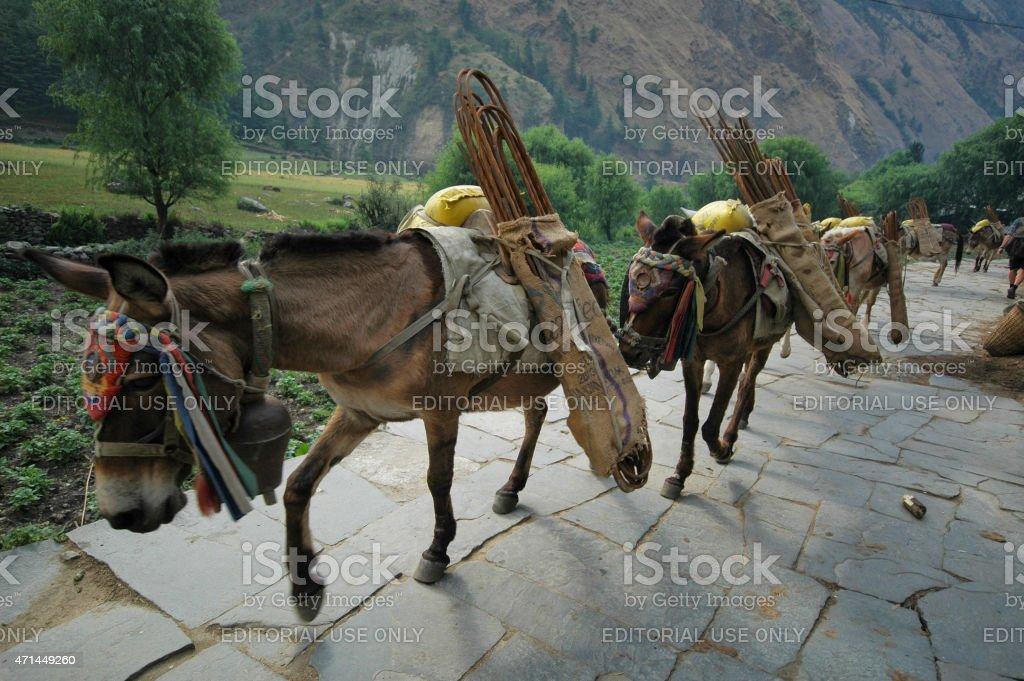 Construction works Annapurna circuit Nepal stock photo