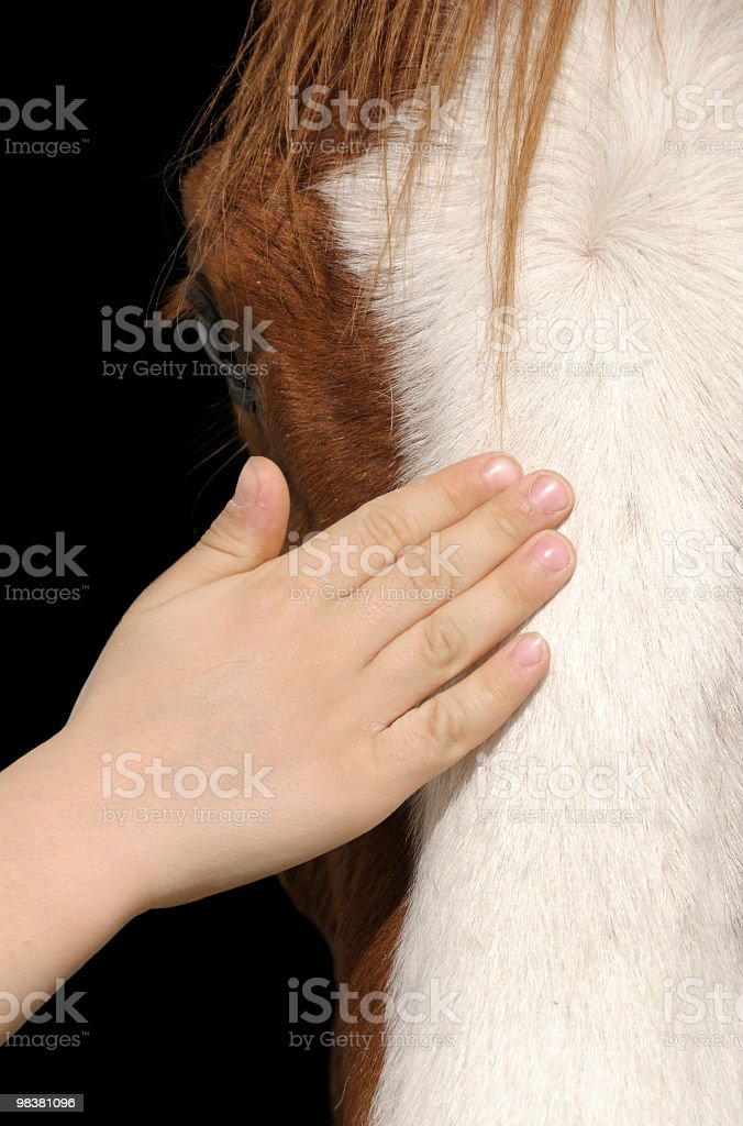 Contact Between Child and Horse royalty-free stock photo
