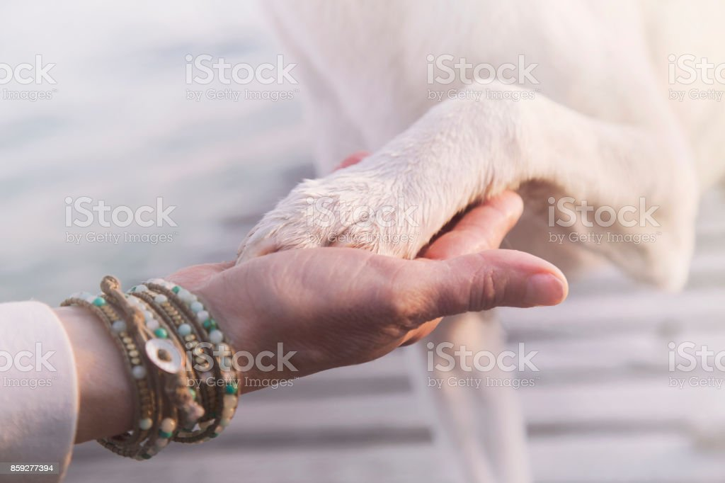 contact between dog paw and human hand, gesture of affection stock photo
