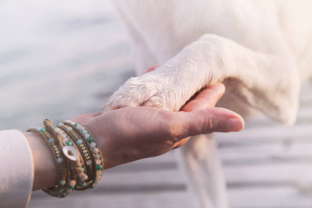 contact between dog paw and human hand, gesture of affection contact between dog paw and human hand, gesture of affection animal hand stock pictures, royalty-free photos & images