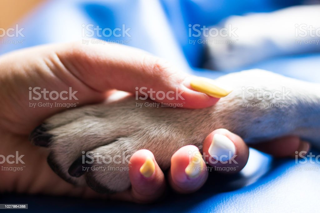 Contact between dog paw and human hand. Young woman and her dog