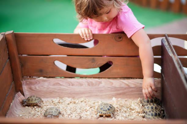 streichelzoo, schildkröten in kinder-händen. - babyschildkröten stock-fotos und bilder