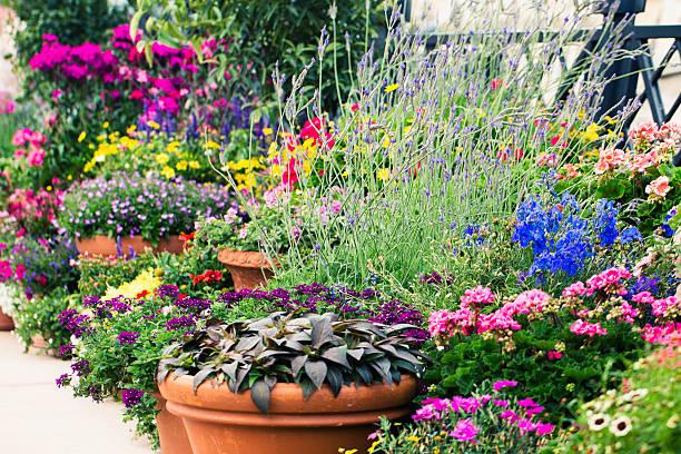 Container Flower Garden stock photo